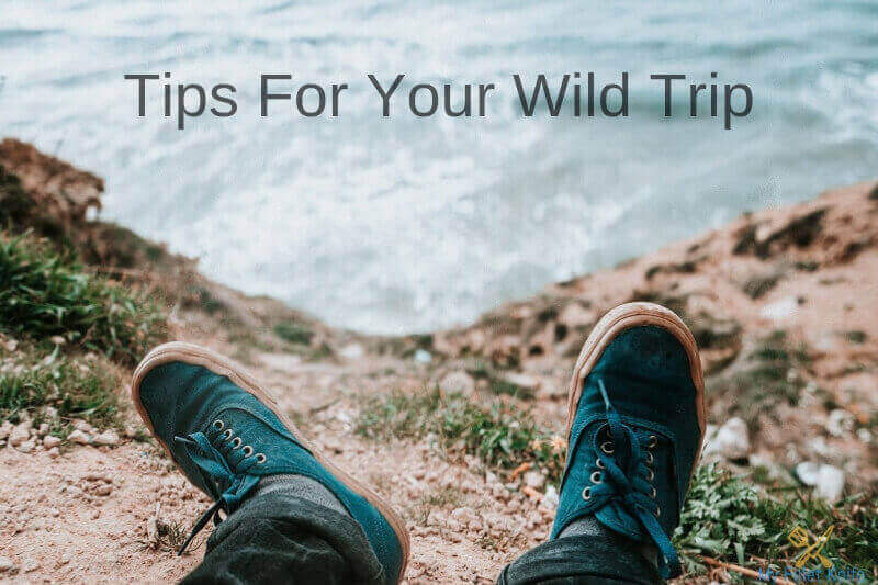 Tips for your Wild Trip